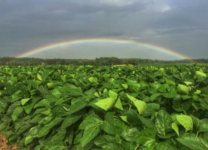 A green field with a rainbow arcing above