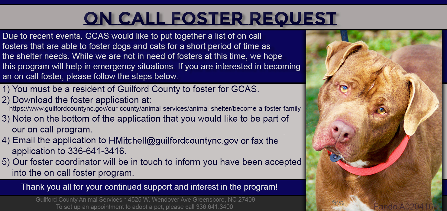 Become A Foster Family Guilford County Nc