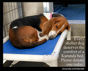 Animal Shelter | Guilford County, NC